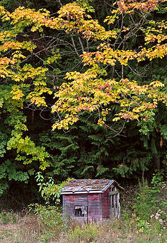 Little Red Shack in Mountains in Autumn by Stacey Lynn Payne
