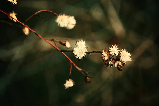 Little Retro Flowers by Julie Strickland