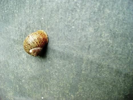 Little Snail by Josephine Z Nyounai
