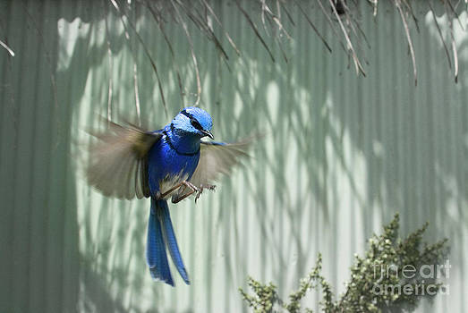 Little Wings by Wendy Slee
