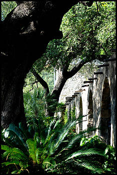 Live Oaks At The Alamo by Kelly Rader