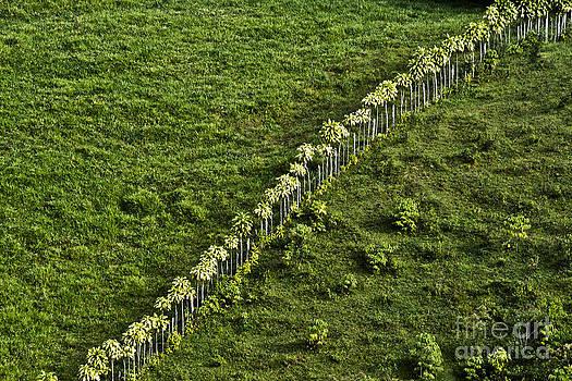 Heiko Koehrer-Wagner - Living Fence