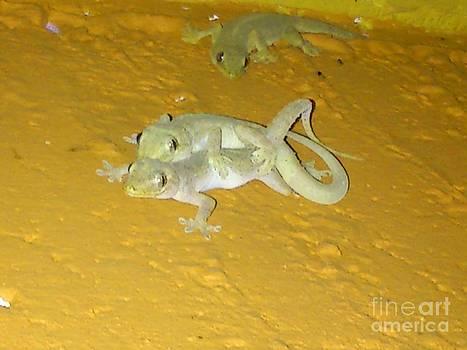 Lizard by David Lrs