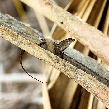 Suzie Banks - Lizard Hiding