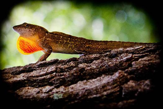 Lizard  by Kevin Lubin