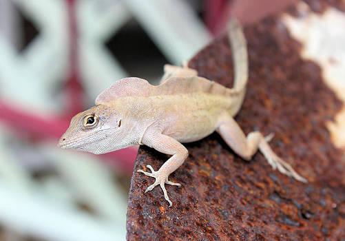 Suzie Banks - Lizard on a Rusty Shovel