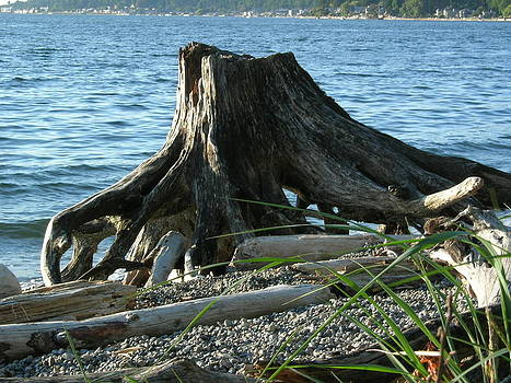Log Monster by Christine Burdine