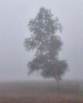Lone Birch by Yves Pelletier
