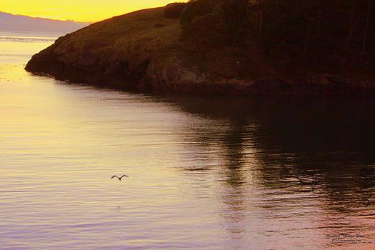 Lone Bird at Rosario Beach Point by Randall Thomas Stone