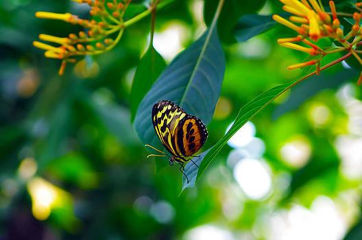 Lone Butterfly by Michael Krahl