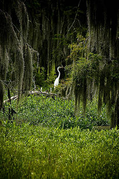 Lone Egret by Shawn McElroy