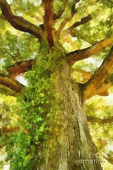 Lone Oak 01 by Dawn Serkin