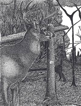 Lone Stag in a Wood by Tony  Nelson