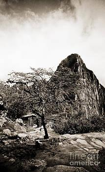 Darcy Michaelchuk - Lone Tree at Machu Picchu