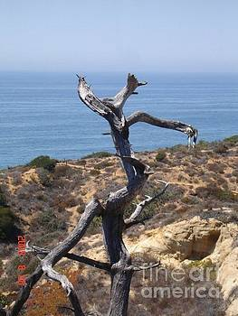 Lone tree San Diego by Carol Wright