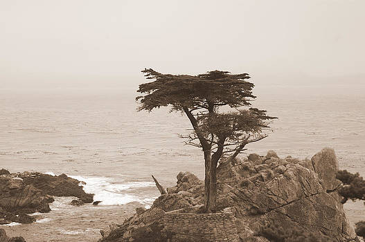 Loneliest Tree in the World by GuitarGeeks Photography
