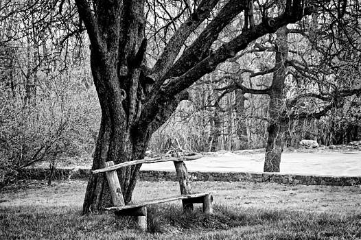 Zoran Buletic - Lonely Bench