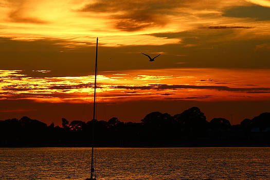 Lonely Bird of Cedar Key by Mike Wilber