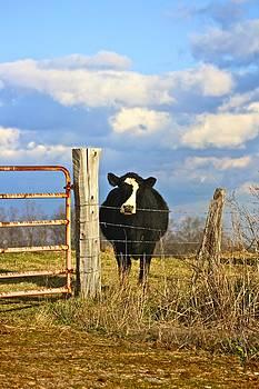 Jennifer Lamanca Kaufman - Lonely Cow