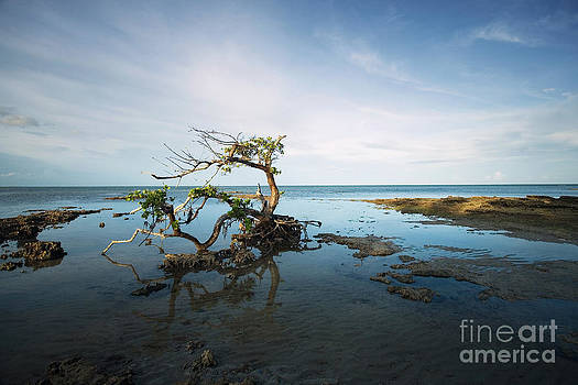 Lonely Mangrove by Matt Tilghman