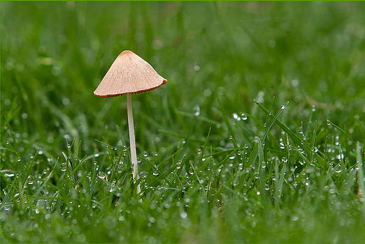 Lonely Mushroom by Miguel Capelo