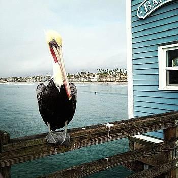 Lonely Pelican. #pelicans #pier by Rita Spiegel