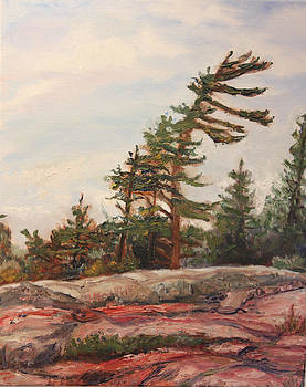 Lonely Pine by Linda Woolven