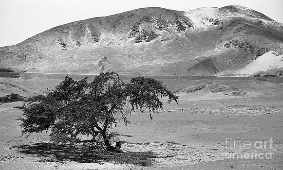 Darcy Michaelchuk - Lonely Tree