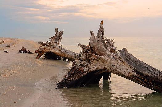 Carmen Del Valle - Lonesome Beach