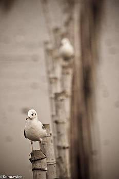 Lonesome by Kornrawiee Miu Miu