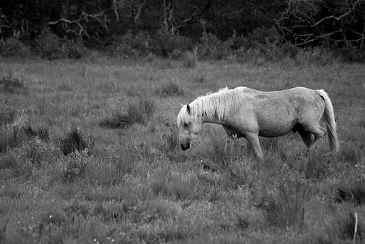 Lonesome Pony by Lori Tambakis
