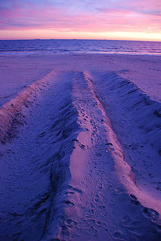 Long Beach Sand Dunes by David Clark