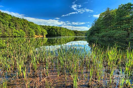 Adam Jewell - Long Branch Lake Marsh