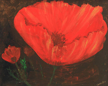 Lonley poppy by Robert Thomaston