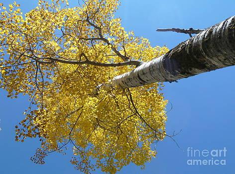 Art Studio - Look Up In Autumn