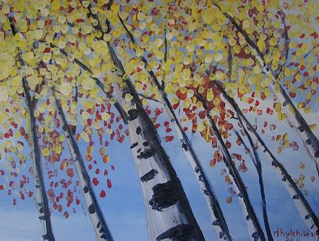Looking Up the Aspens by Don Hutchison