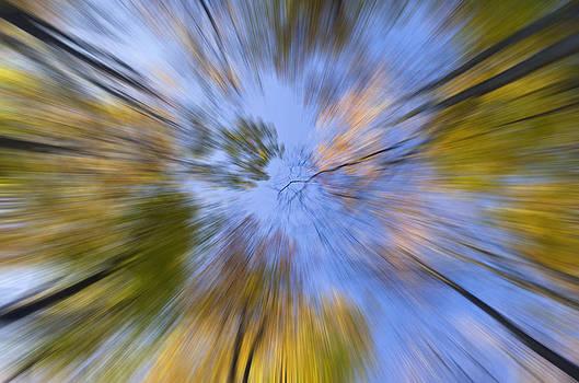 Looking up by Yuri Santin