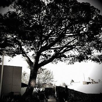#losangeles #santamonicacollege #tree by Joe Pardo