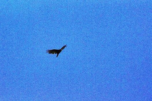 Lost falcon bird by Pierre-Marc Cardinal