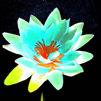 Ann Tracy - Lotus 3