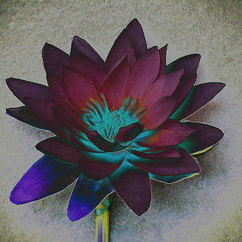 Ann Tracy - Lotus 6