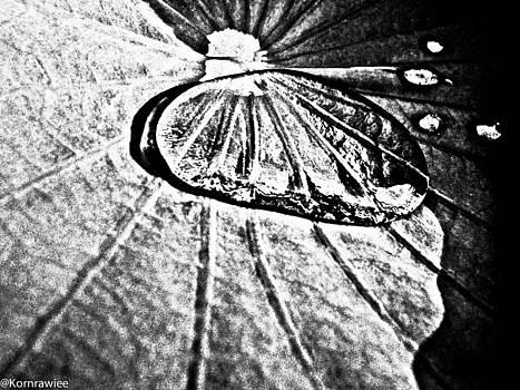 Lotus and her tears by Kornrawiee Miu Miu
