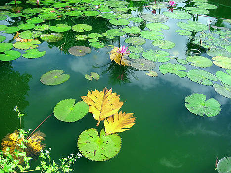 Lotus by Ravindra Kajari