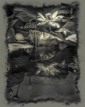 Lotus Reflection In Black And White by Jill Balsam