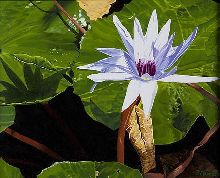 Lotus by Sandra Azancot