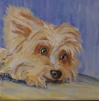 Louie by Maureen Pisano