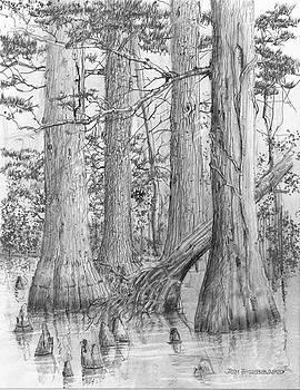 Jim Hubbard - Louisiana-Bald Cypress