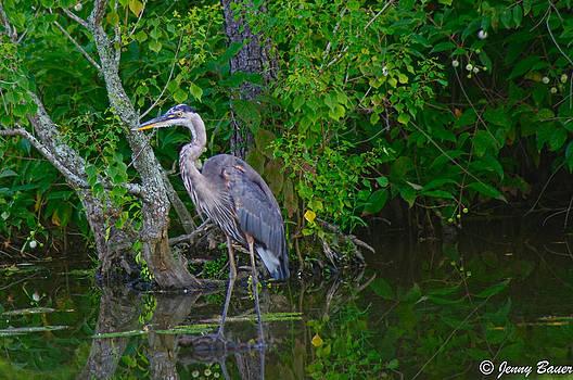 Louisiana Heron by Jenny Bauer