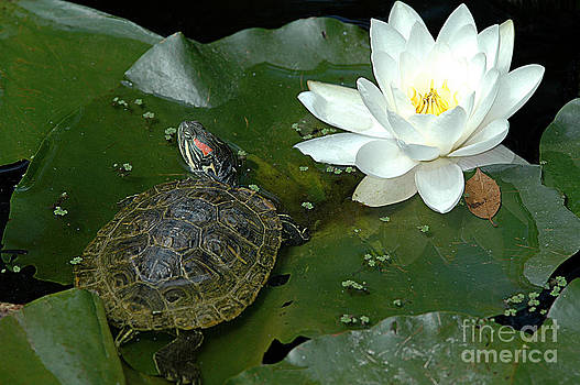 Lounging on a Lily Pad by Tonia Noelle