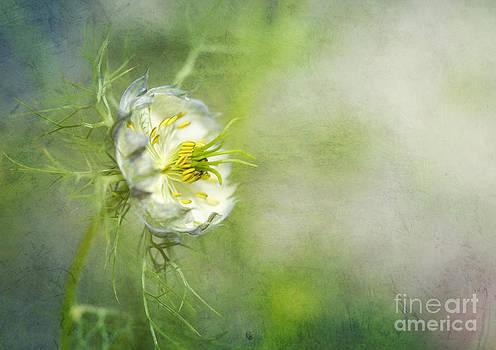Susan Gary - Love in a Mist Floral